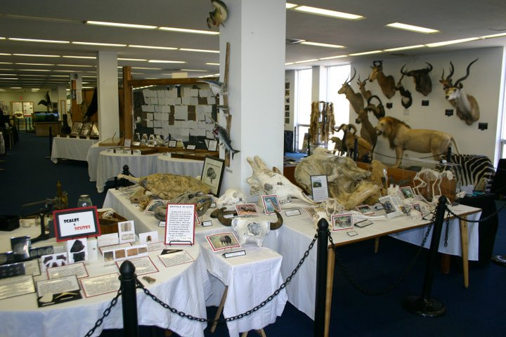The specimens on view at the ULM Museum of Natural History are separate from the research collections that may be destroyed.