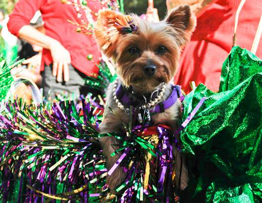 Pet parade continues Mardi Gras tradition, promotes local shelters