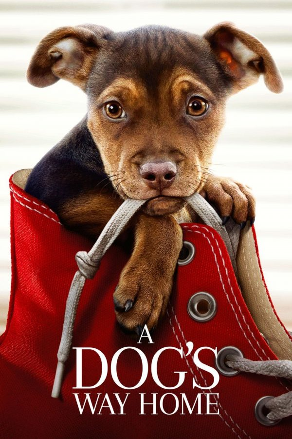Message of endurance, hope  shared in 'A Dog's Way Home'