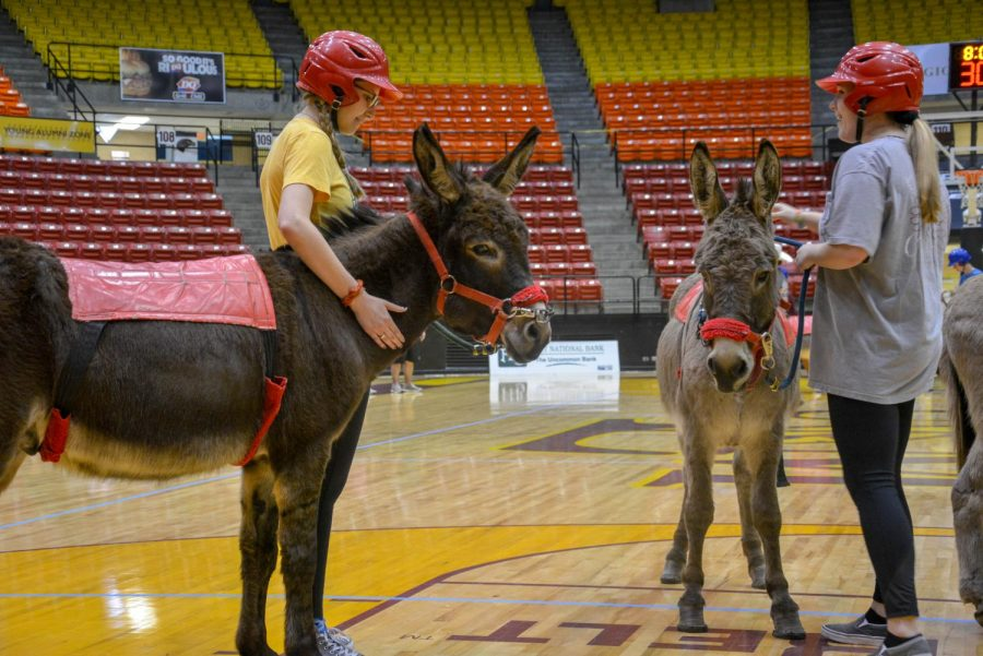 Donkey Basketball: Dunkin' with donkeys