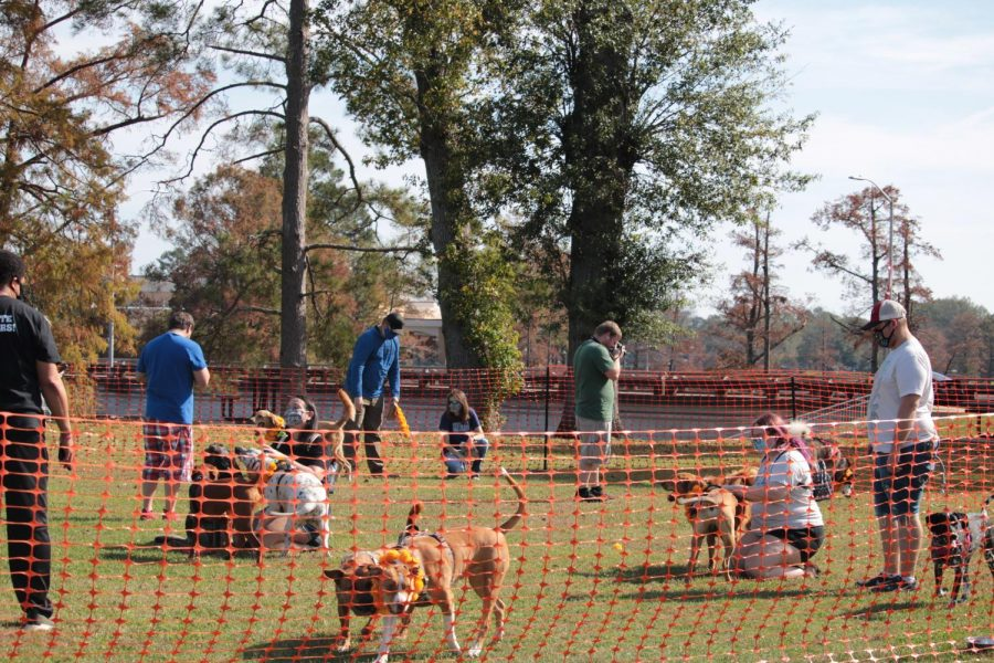 Tihar festival honors dogs, unites campus to community
